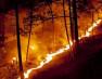 जंगल की आग में तीन बच्चों की जिंदा जलकर मौत, एक की हालत गंभीर