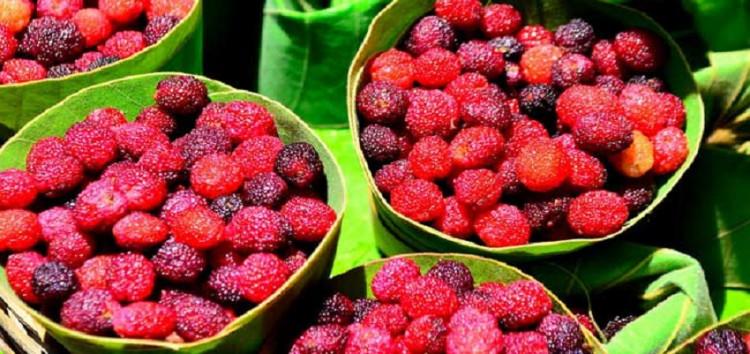 जंगली फलों का समृद्ध संसार,जायके के साथ औषधीय गुणों की भरमार
