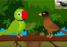 तोता -मैना के प्यार के किस्से हुए जगजाहिर!